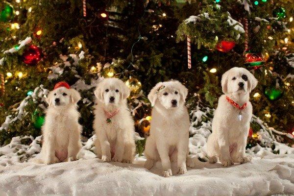 Christmas Puppies {Santa Paws 2: Santa Pups} #SantaPaws2