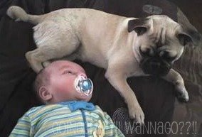 becoming friends {A pug and her boy} #SharetheLove