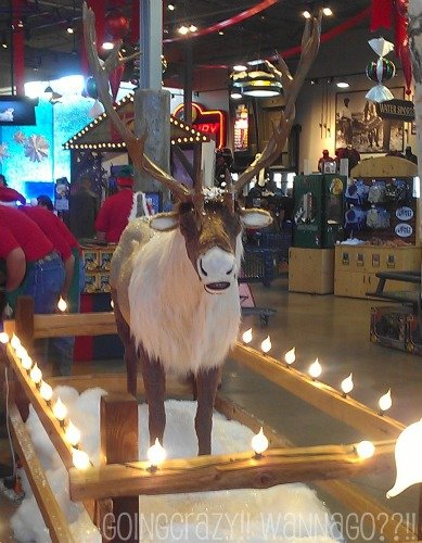 Talking Reindeer at Santa's Wonderland #BB4Me