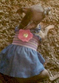Bitty in Summer {dress up your pet}
