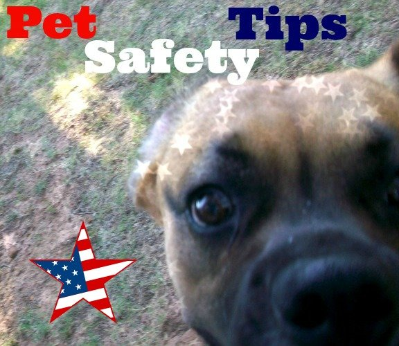 Pet Safety Tips {Molly-Boxer German Shepherd} #NudgesMoments