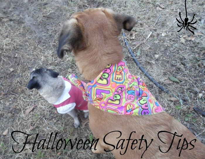 Halloween Safety Tips for Pets #shop #TrickOrTreatEm #CollectiveBias