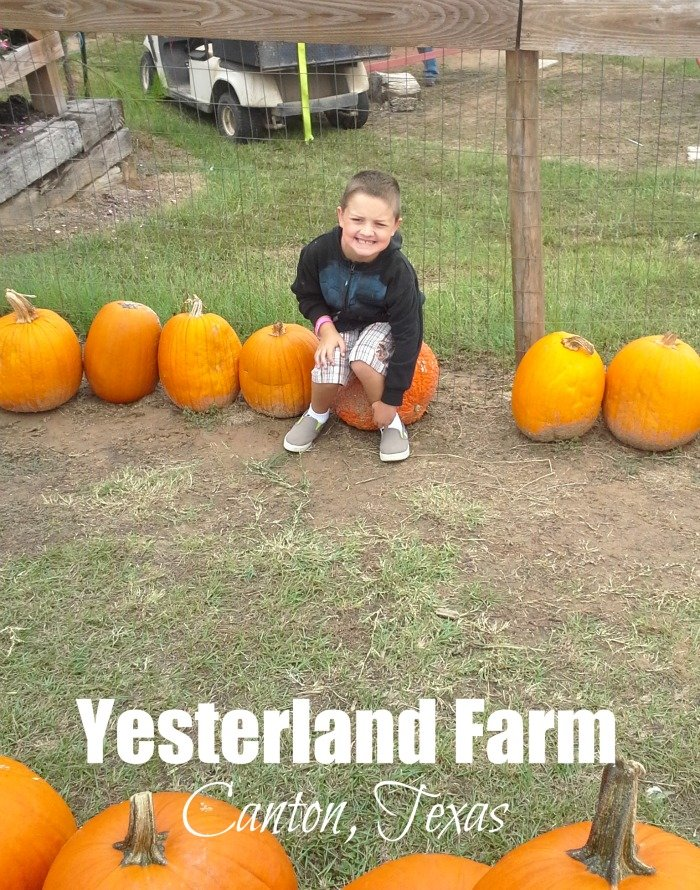 There are tons of photo opps at Yesterland Farm in Canton, TX
