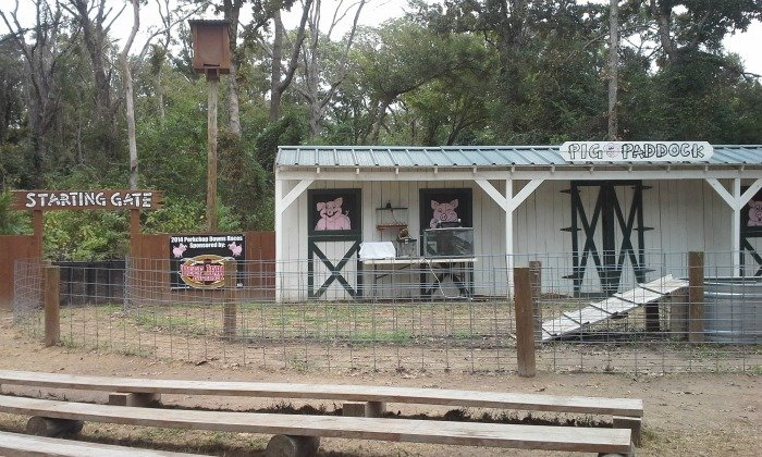 You have to see the pig races at Yesterland Farm in Canton, TX